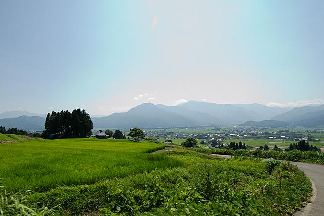 魚沼産コシヒカリ生育確認 (新潟・福島豪雨後)