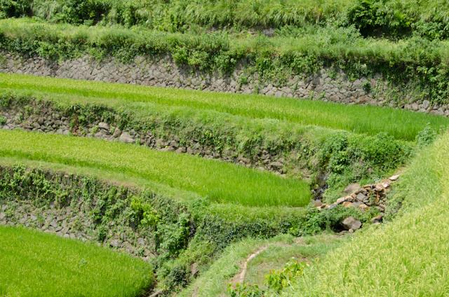 浜野浦の棚田(日本の棚田百選)石積み