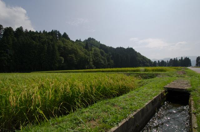 南魚沼産コシヒカリ圃場2013-2