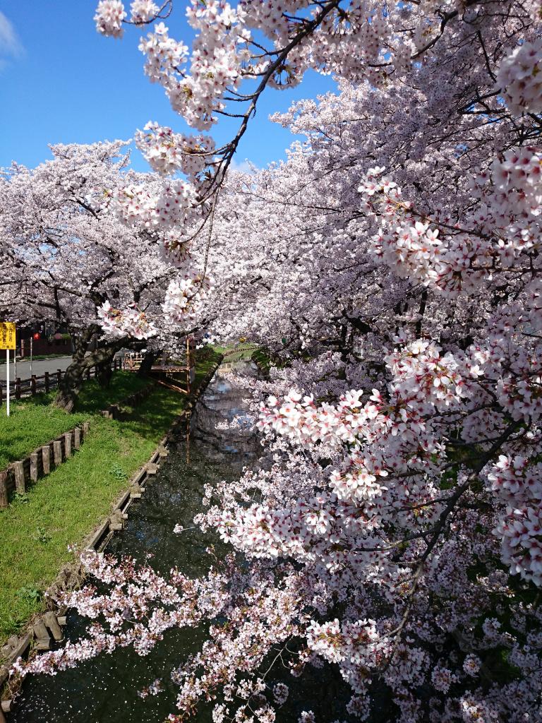 2015桜店舗前_DSC_4717-03