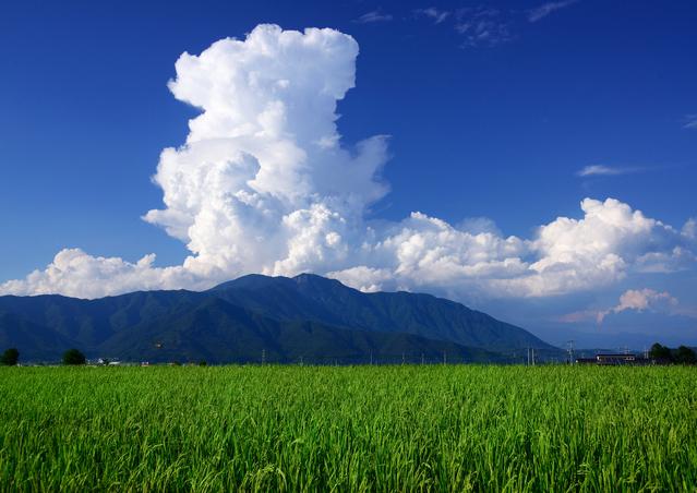 「お米品種」作付割合 平成28年産(速報)