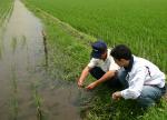 有機JAS 有機栽培米「生産者」に生育状況を伺う