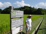 有機栽培生産者から説明(佐渡)