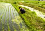 有機栽培米を求めて「山形」へ